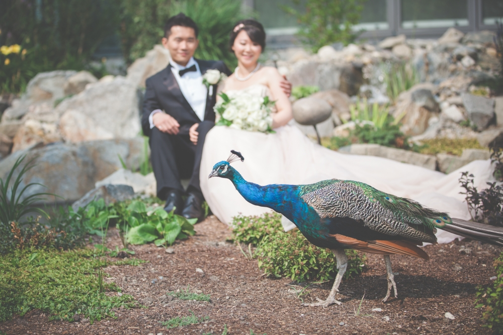 Calgary Zoo Wedding Photography, Calgary WEdding Photographer