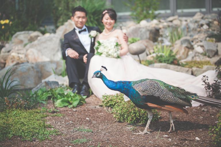 Calgary Zoo Wedding Photography, Calgary WEdding Photographer
