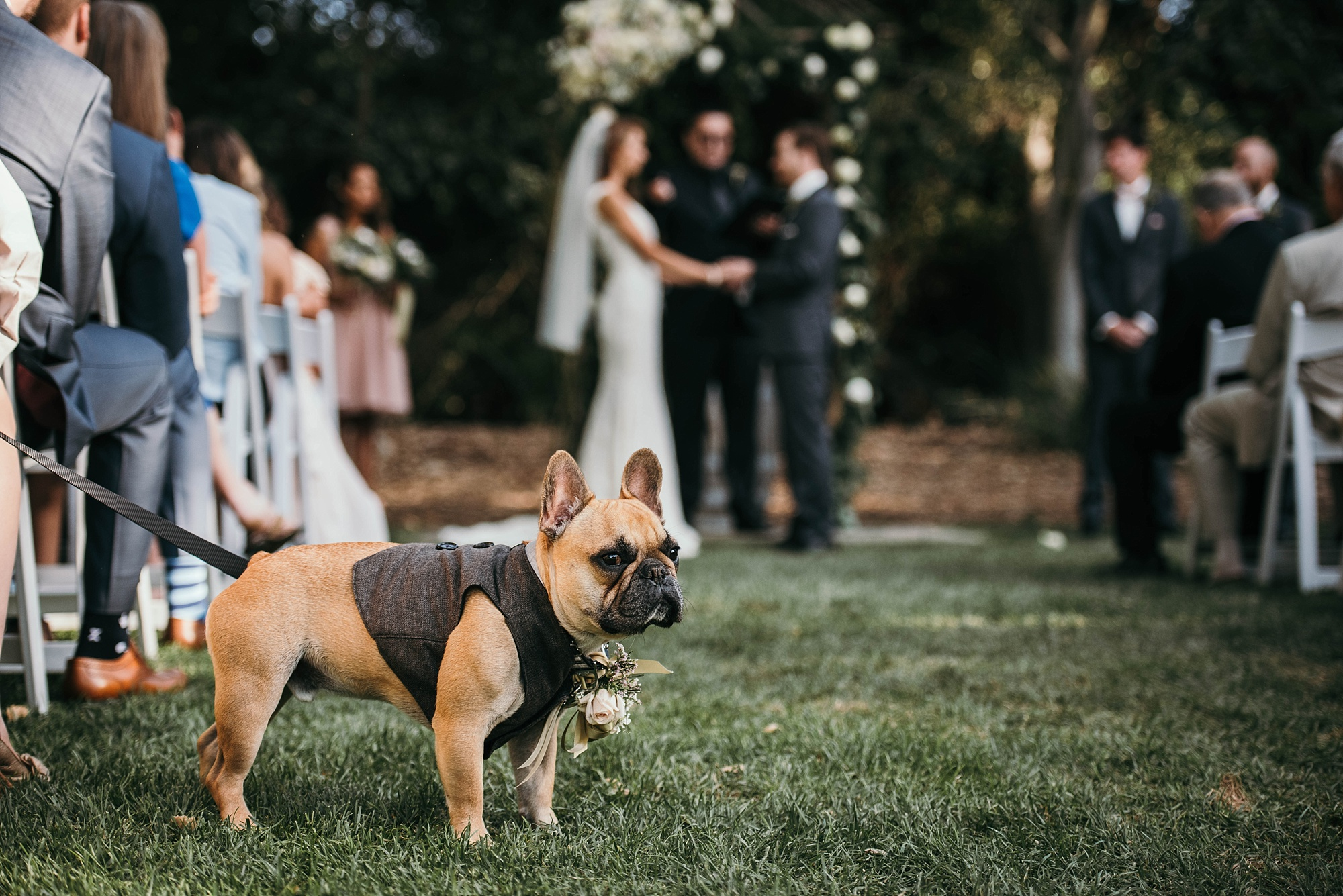 cute French bull dog as groomsman in dog friendly Californian wedding