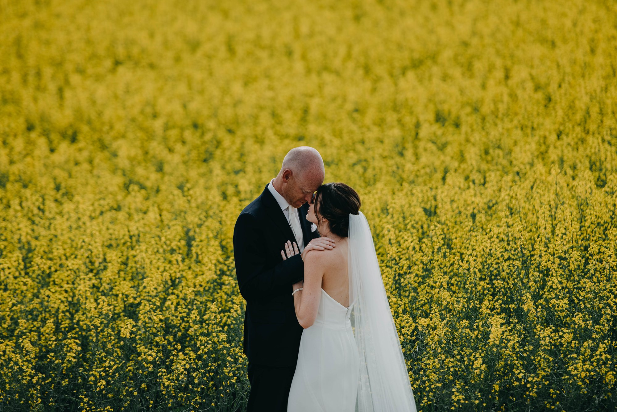 bride and groom embracing standing in front of a canola field during farm wedding
