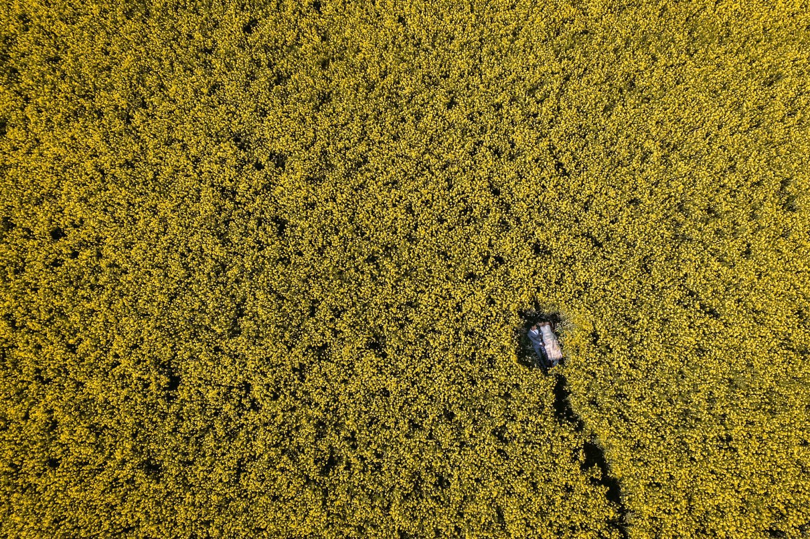 bride and groom canola drone wedding photo