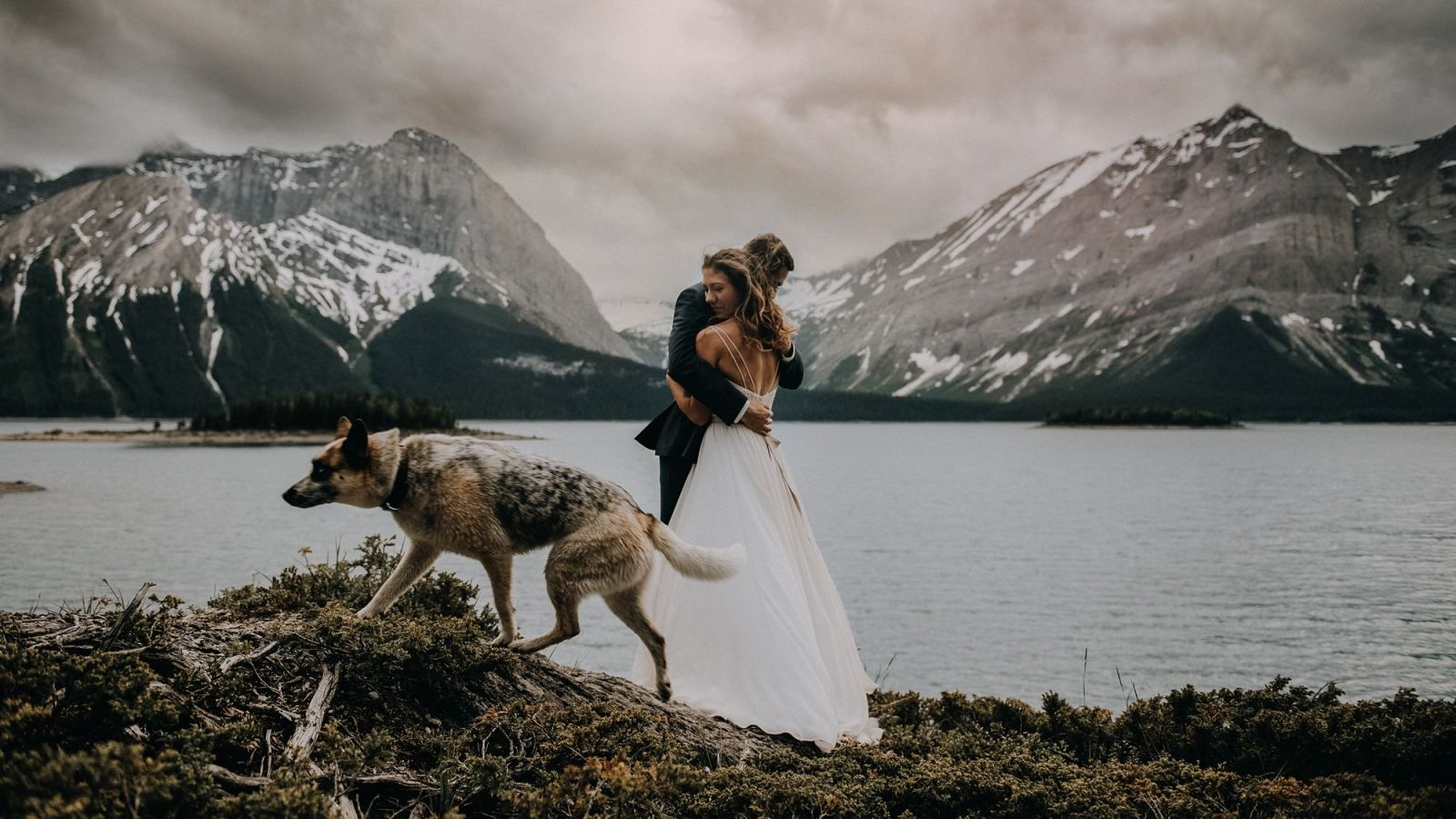 bride and groom with dog and lake in kananaskis mountain lodge wedding